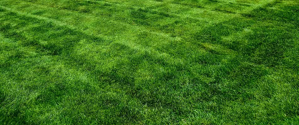 4 Rules for Mowing Lawns in Michigan