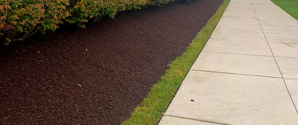 Mulch installation under shrubs at a commercial property in Shelby, MI.