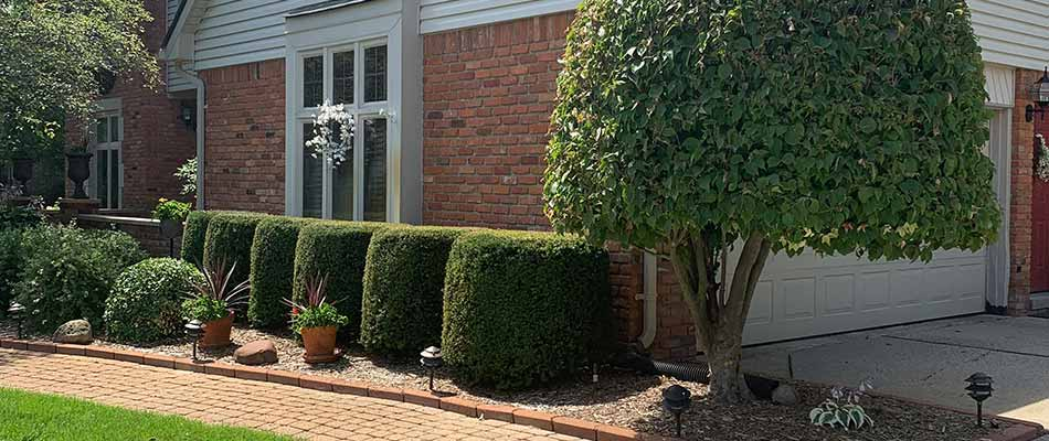 Landscape bushes and shrubs neatly trimmed at a Chesterfield, MI home.