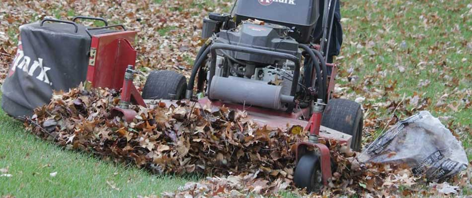 Leaves being collected for removal from a Chesterfield, MI property.