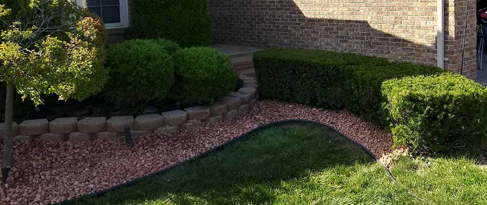 Small shrubs recently trimmed at a Macomb, MI home.