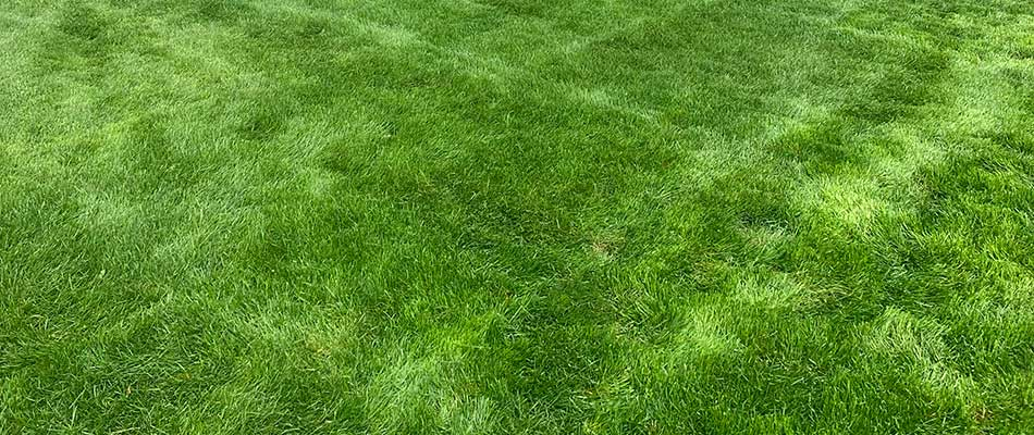 Weed-free, healthy green lawn in Chesterfield, MI.